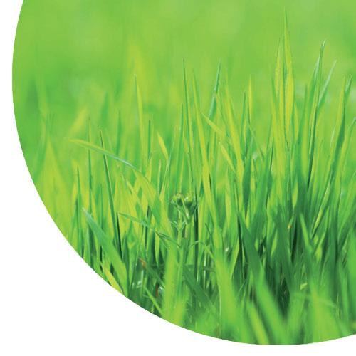 Graspapier Ist Nachhaltig Und Reduziert CO2-Emissionen